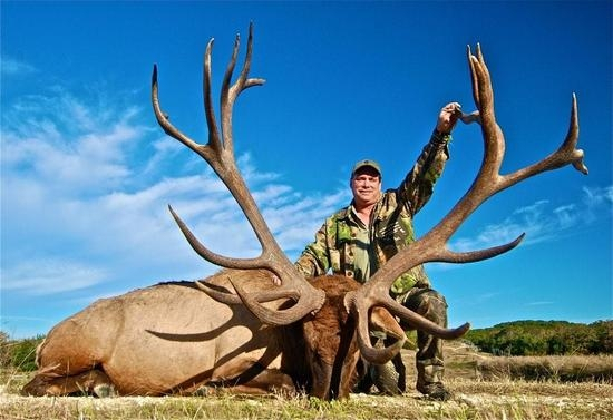 2010 World Record Bull Elk http://www.huntingtexastrophies.com/2010-harvests/world-record-elk/